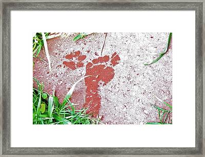 Framed Print featuring the photograph Sweet Steps by Charlotte Schafer