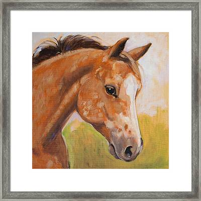 Sweet Strawberry Roan Appaloosa Framed Print by Tracie Thompson