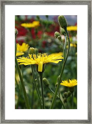 Sweet Suprise Framed Print by Bruce Bley