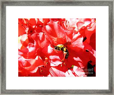 Framed Print featuring the photograph Sweet Surrender by Robyn King