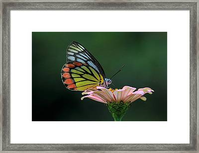 Delicate Beauty Framed Print by Ramabhadran Thirupattur