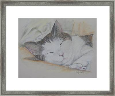 Sweet While Sleeping Framed Print by Cathy Lindsey