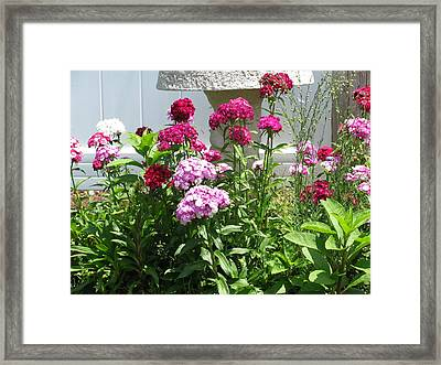 Framed Print featuring the photograph Sweet William Flowers by Margaret Newcomb