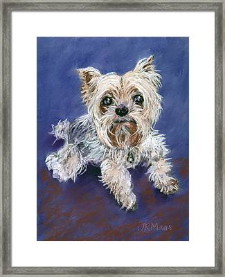 Framed Print featuring the pastel Sweet Yorkie by Julie Maas