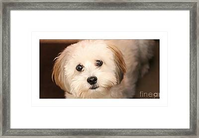 Sweetest Puppy Dog Eyes Framed Print by Barbara Griffin
