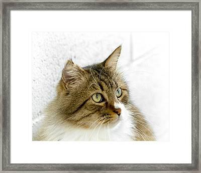 Sweetheart Framed Print