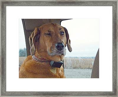 Sweetie Taking Eye  Picture Framed Print
