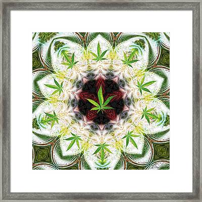 Sweetleaf Mandala Framed Print