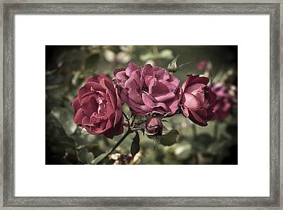 Sweetly Pink Framed Print by Christi Kraft