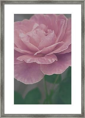 Sweetly Framed Print