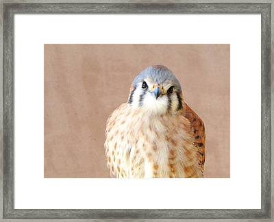 Framed Print featuring the photograph Sweetness by Brenda Pressnall