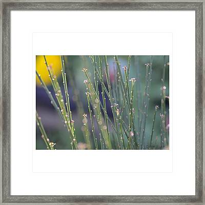 Sweetness Framed Print by Penni D'Aulerio