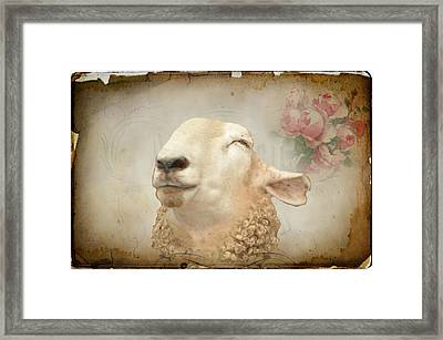 Sweety Pie Framed Print
