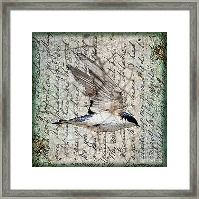 Swift Wings Framed Print by Judy Wood