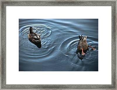Swim And Take The Plunge Framed Print by Allan Millora