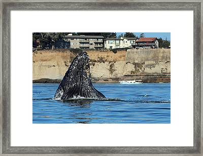 Swim Away Framed Print