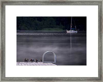 Swim Or Sail Framed Print by Aaron Bedell
