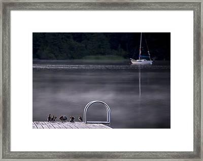 Swim Or Sail Framed Print