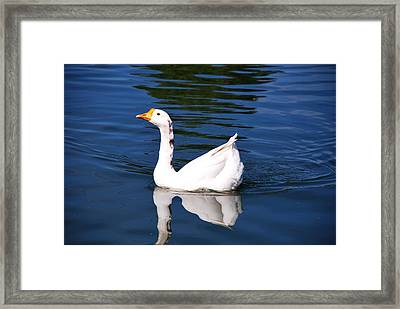Swimming Alone Framed Print by Linda Segerson