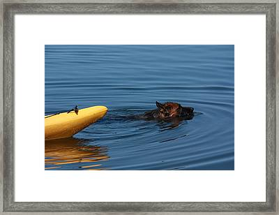 Swimming Anna B Framed Print
