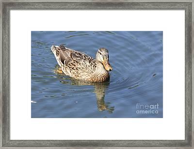 Swimming Around Framed Print