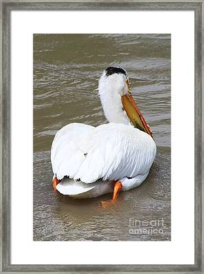 Framed Print featuring the photograph Swimming Away by Alyce Taylor