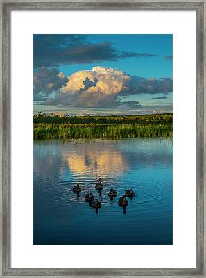 Swimming Ducks And Clouds Reflection Framed Print by Jacques Laurent