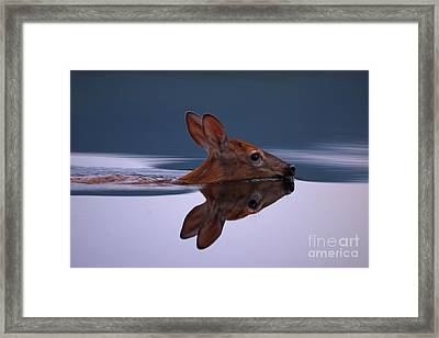 Swimming Fawn Framed Print