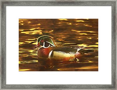 Framed Print featuring the photograph Swimming In A Sea Of Gold  by Brian Cross