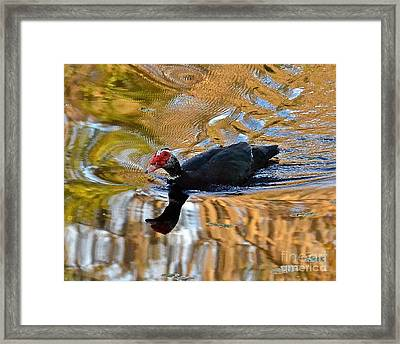 Swimming In Color Framed Print