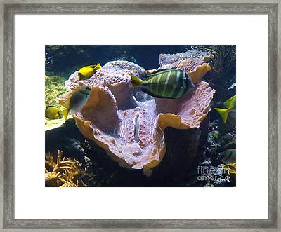 Framed Print featuring the photograph Swimming In Danger by Brigitte Emme