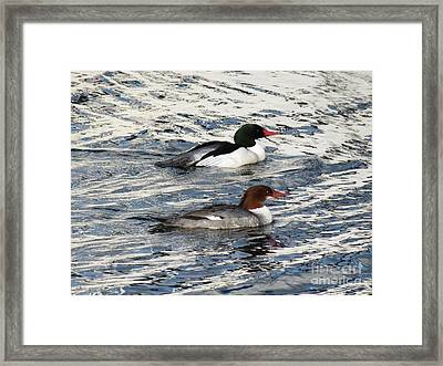 Swimming In Silver Framed Print by Gayle Swigart