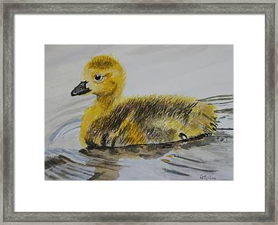 Swimming Is Fun Framed Print