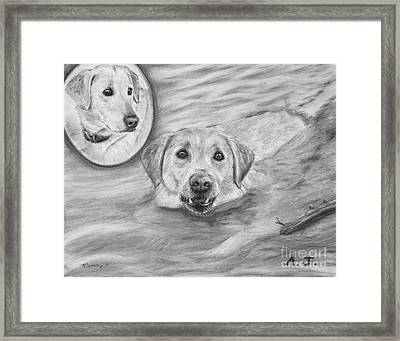 Swimming Labrador Framed Print by Kate Sumners