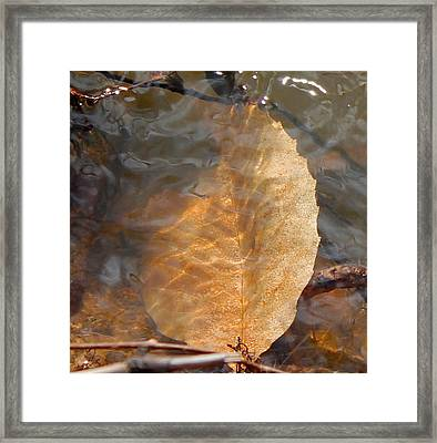 Framed Print featuring the photograph Swimming Leaf by Candice Trimble
