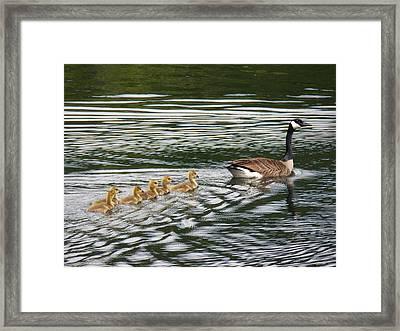 Swimming Lesson Framed Print by Jane Munroe