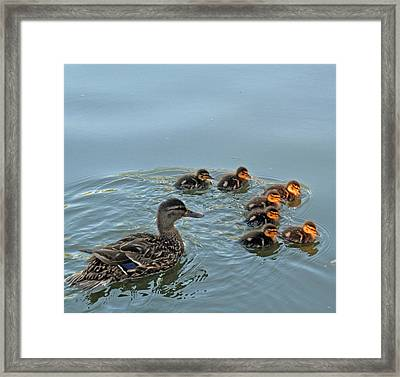 Swimming Lessons Two Framed Print