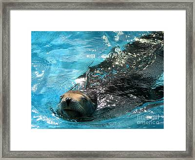 Framed Print featuring the photograph Swimming Sea Lion by Kristine Merc