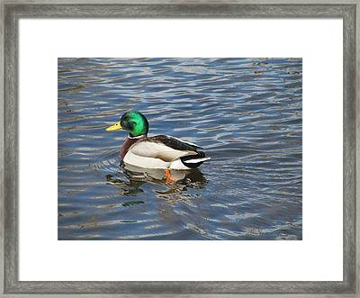 Swimming To The Left Framed Print