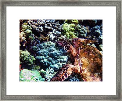 Swimming With A Sea Turtle Framed Print by Peggy Hughes