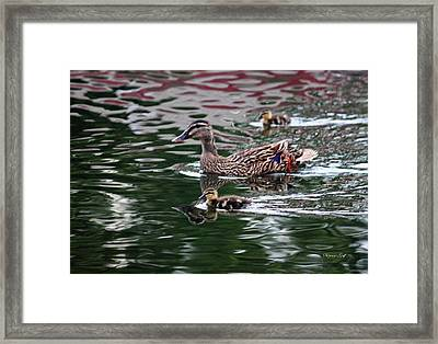 Swimming With Mama Framed Print by Suzanne Gaff