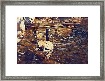 Swimming With Mom Framed Print by Maria Angelica Maira