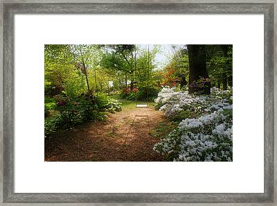 Swing In The Garden Framed Print