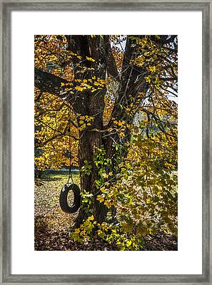 Swing In The Maple Tree Framed Print