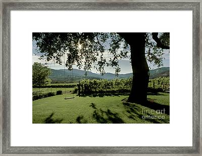 Swinging At Joulian Vineyards Framed Print