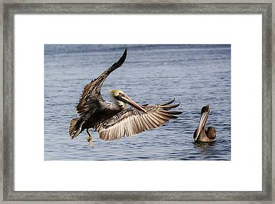 Swinging By To Say Hello Framed Print by Paulette Thomas
