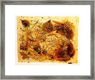Swirl Framed Print by David Blank