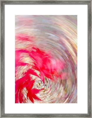 Swirling Japanese Maple Leaves Framed Print