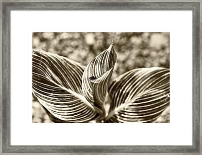 Swirls And Stripes Framed Print