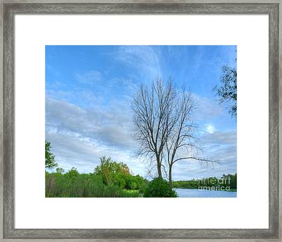 Swirly Sky And Tree Framed Print